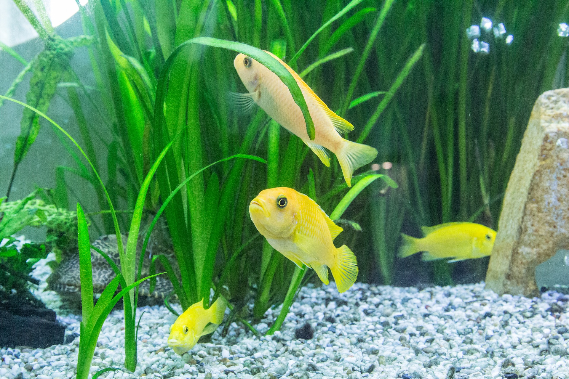 Aquarium starten